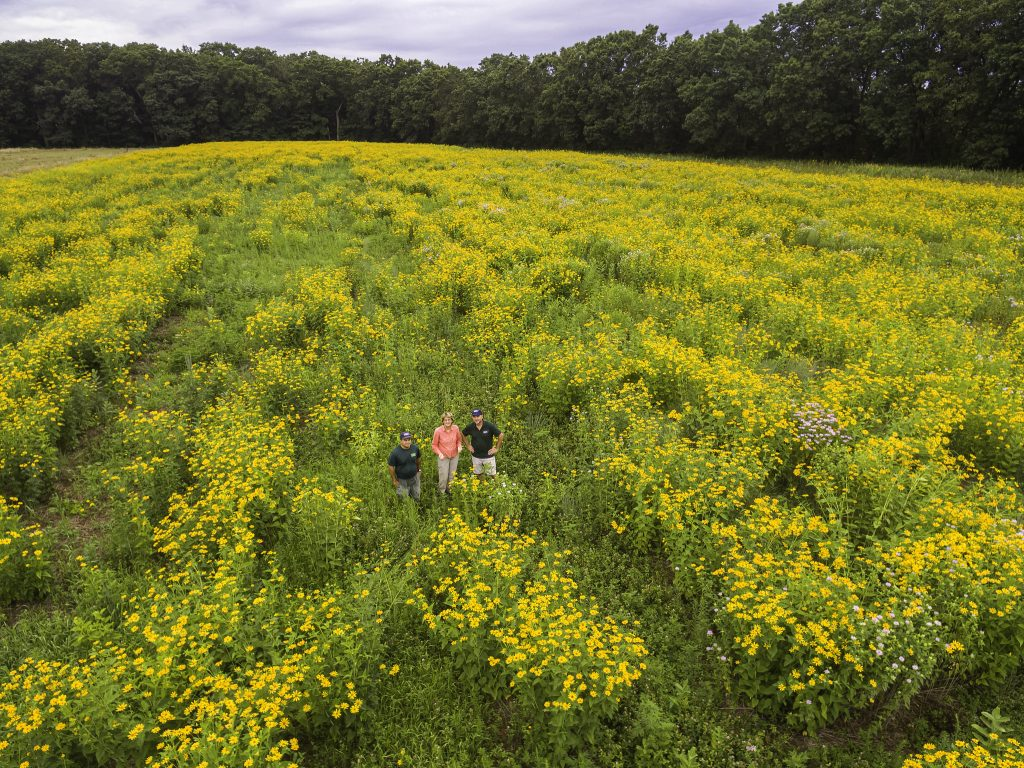 Image of ZNE Field Cons. Dept. staff standing amidst 5 acres of wildflowers and grasses native to the northeastern US that they planted, together with staff of Hutchins Farm, at a Blanding's turtle nesting site on unused agricultural land. In bloom is primarily oxeye sunflower (Heliopsis helianthoides). Photo: Paul Rezendes.