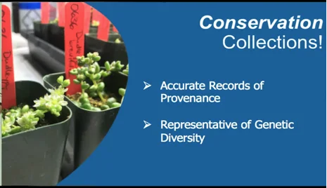 Screenshot from What is a Conservation Collection? video