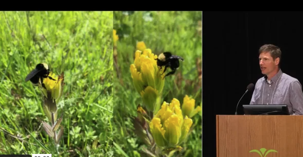 Screenshot from Reversing regional extinction: Recovery of golden paintbrush in Oregon video