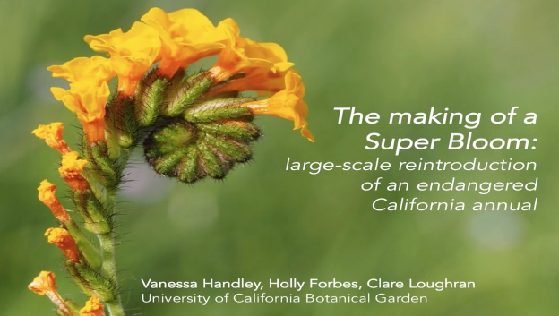 Screenshot from The making of a Super Bloom: large-scale reintroduction of an endangered California annual video