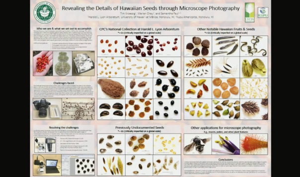 Screenshot from Revealing the Details of Hawaiian Seeds Through Microscope Photography video
