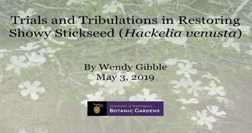 Screenshot of Trials and tribulations in restoring Showy Stickseed (Hackelia venusta) video
