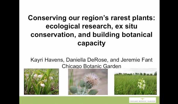 Screenshot of Research at Chicago Botanic Garden: Cirsium pitcheri video
