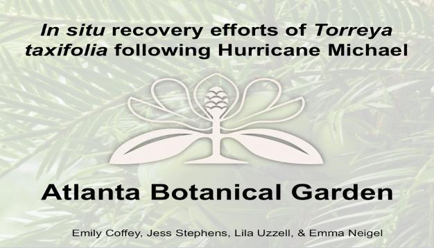 Screenshot from In situ recovery efforts of Torreya taxifolia following Hurricane Michael video