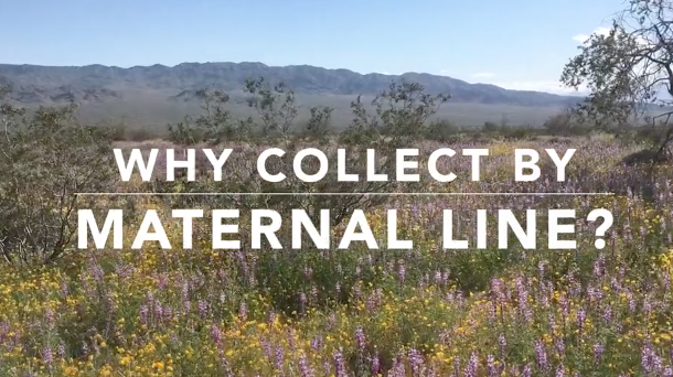 Screenshot of All in the family - the case for collecting by maternal lines video