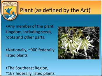 Screenshot of Endangered Species Act and Recovery Planning video