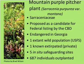 Screenshot of Safeguarding Mountain Bog and the Mountain Purple Pitcher Plant video