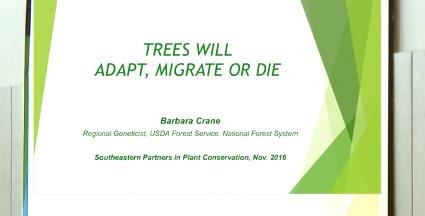 Screenshot of Trees Will Adapt, Migrate or Die video