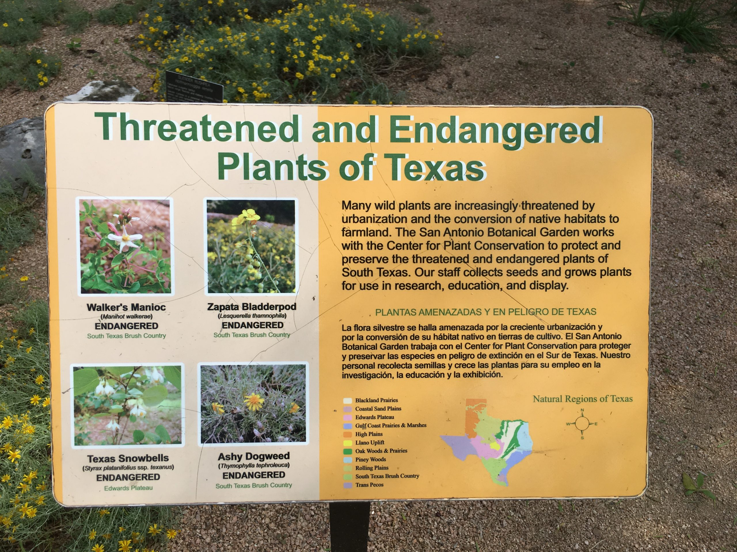 Threatened and Endangered Native plant display at the San Antonio Botanical Garden in San Antonio, TX