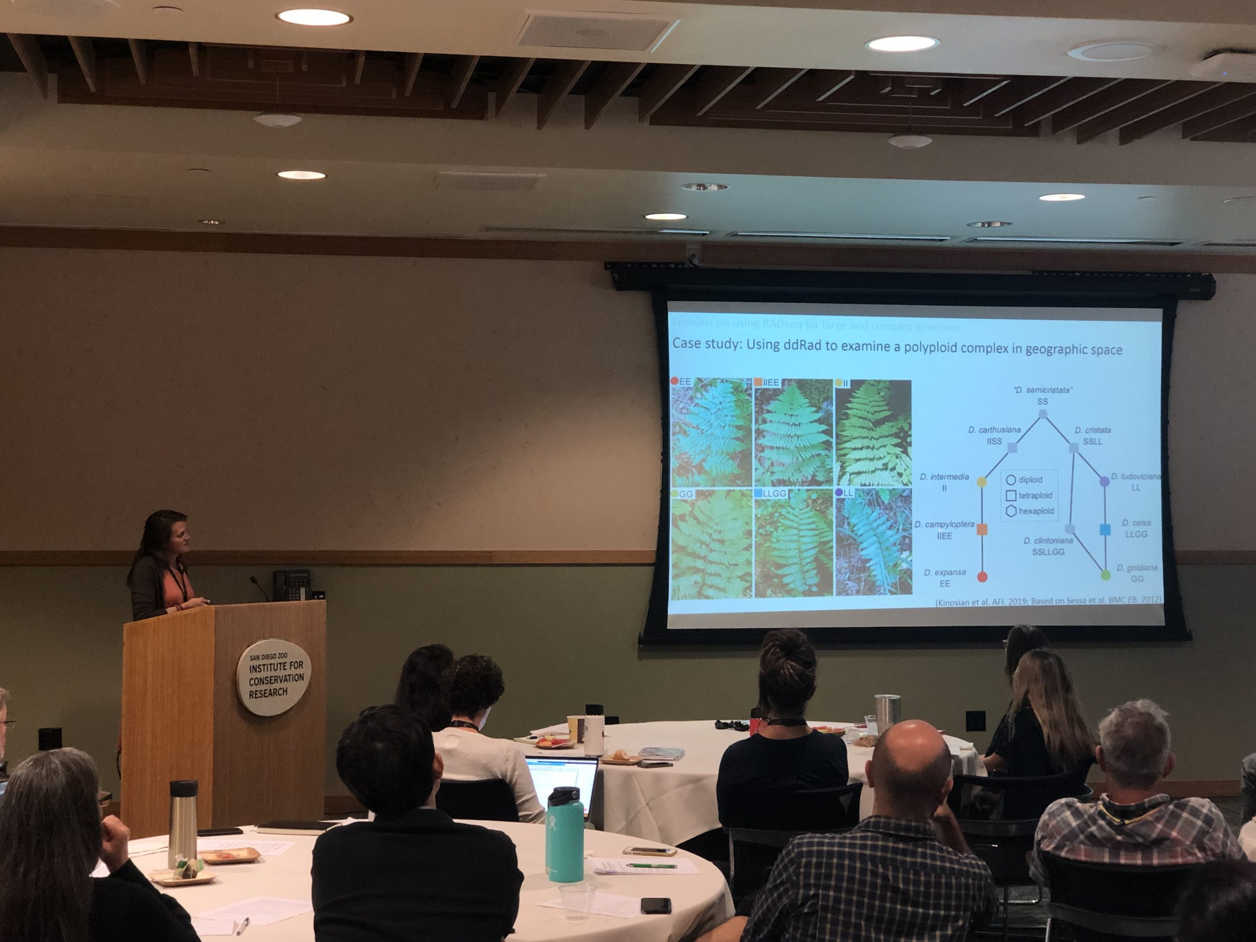 Sally Chambers, Ph.D., from Marie Selby Botanical Gardens, presented on her experiences using RAD-seq with species with large genomes.