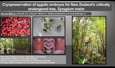 Screenshot of Cryopreservation of zygotic embryos for New Zealand's critically endangered tree, Syzygium maire video