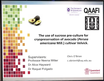 Screenshot of The Use of Sucrose Pre-culture for Cryopreservation of Avocado (Persea americana Mill.) Cultivar 'Velvick' video
