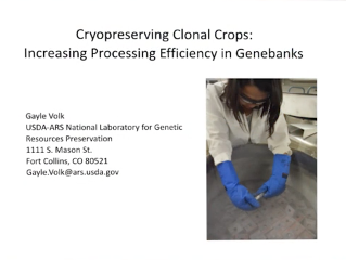Screenshot of Cryopreserving Clonal Crops: Increasing Processing Efficiency in Genebanks video