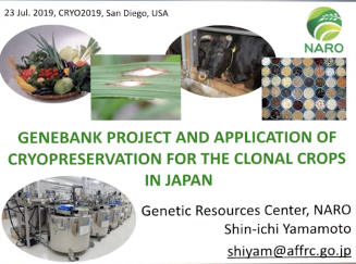 Screenshot of Genebank Project and Application of Cryopreservation for the Clonal Crops in Japan video