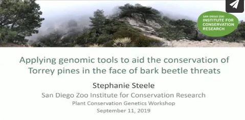 Screenshot of Applying genomic tools to aid the conservation of Torrey pines in the face of bark beetle threats video