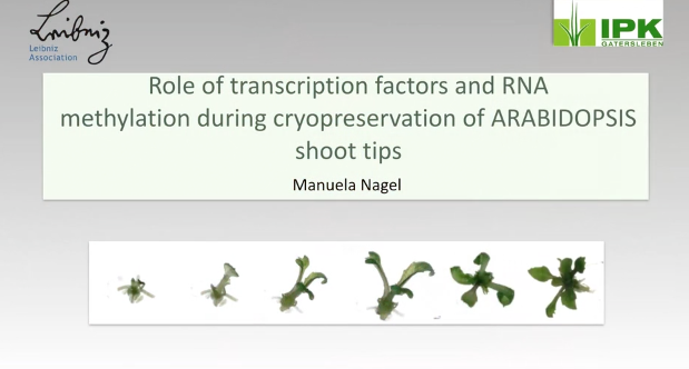 Screenshot of Role of Transcription Factors and RNA Methylation During Cryopreservation of Arabidopsis Shoot Tips video
