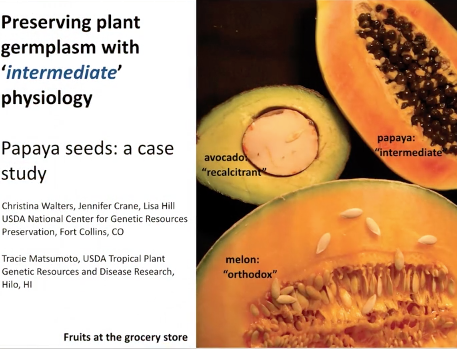 Screenshot of Responses of Papaya Seeds (Carica papaya) During Short and Long Term Storage at Sub-zero Conditions video