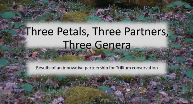 Screenshot of Three petals, three partners, three genera video