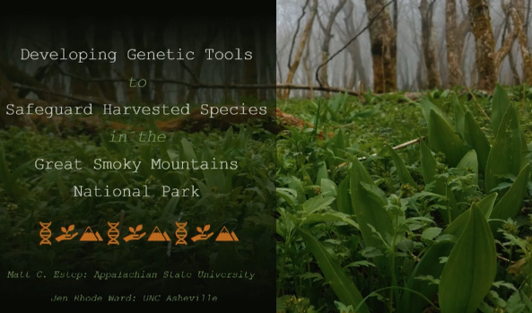 Screenshot of Developing Genetic Tools to Safeguard Harvested Species in the Great Smoky Mountains National Park video