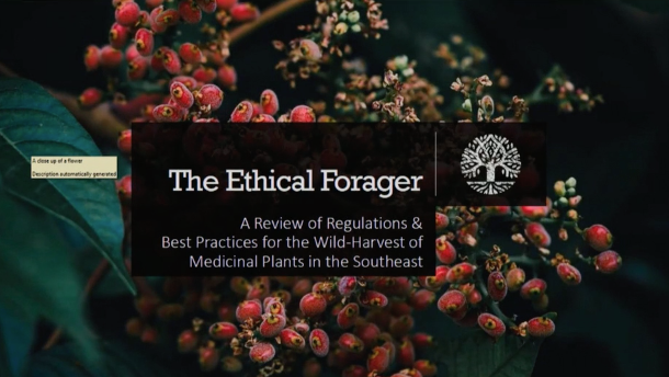 Screenshot of The Ethical Forager: A Review of Harvesting Regulations and Practices for Threatened Medicinal Plants on Public and Private Lands in the Southeast video