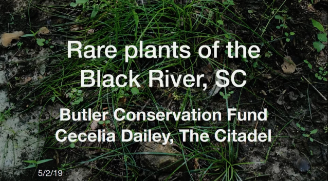 Video screenshot of Rare Plant Habitat Protection on Butler Conservation Fund's Black River, SC Private Lands: Macbridea caroliniana on a Fire-Managed Disturbed Site, Stewartia malacodendron and Collinsonia sp. on Remnant Levee Patches, and Isoetes hymenalis on a Road