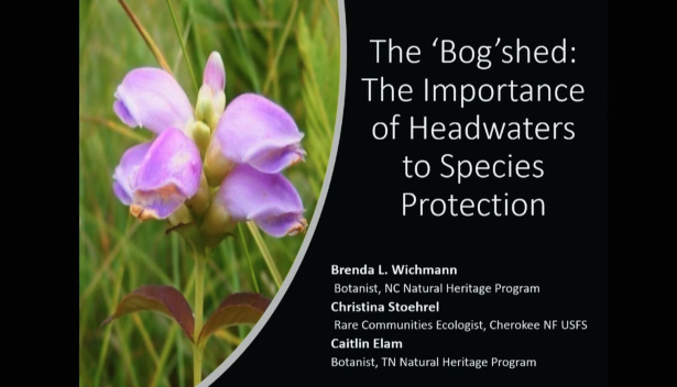 "Screenshot of The ""Bog""Shed: The Importance of Headwaters to Species Protection video."
