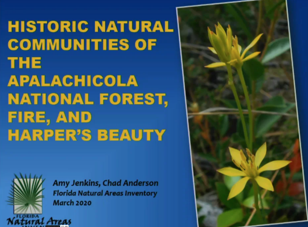 Screenshot of Historic Vegetation and Harper's Beauty in the Apalachicola National Forest video.