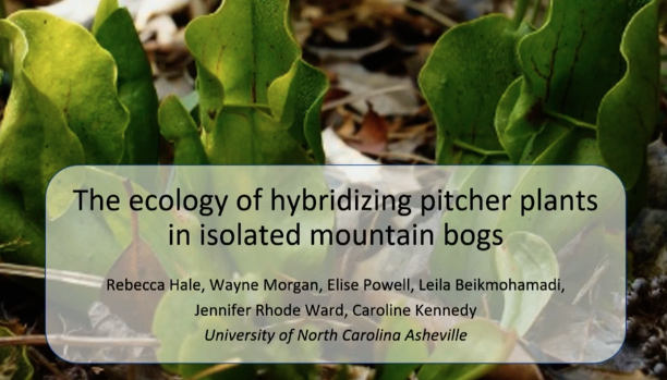 Screenshot The Ecology of Hybridizing Pitcher Plants in Isolated Mountain Bogs video