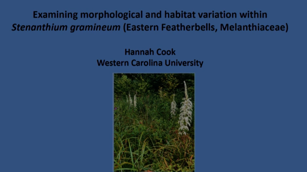Screenshot of Examining Morphological and Habitat Variation within Stenanthium gramineum video