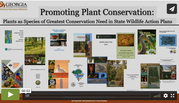 Screenshot of Mincy Moffett video promoting plant conservation.