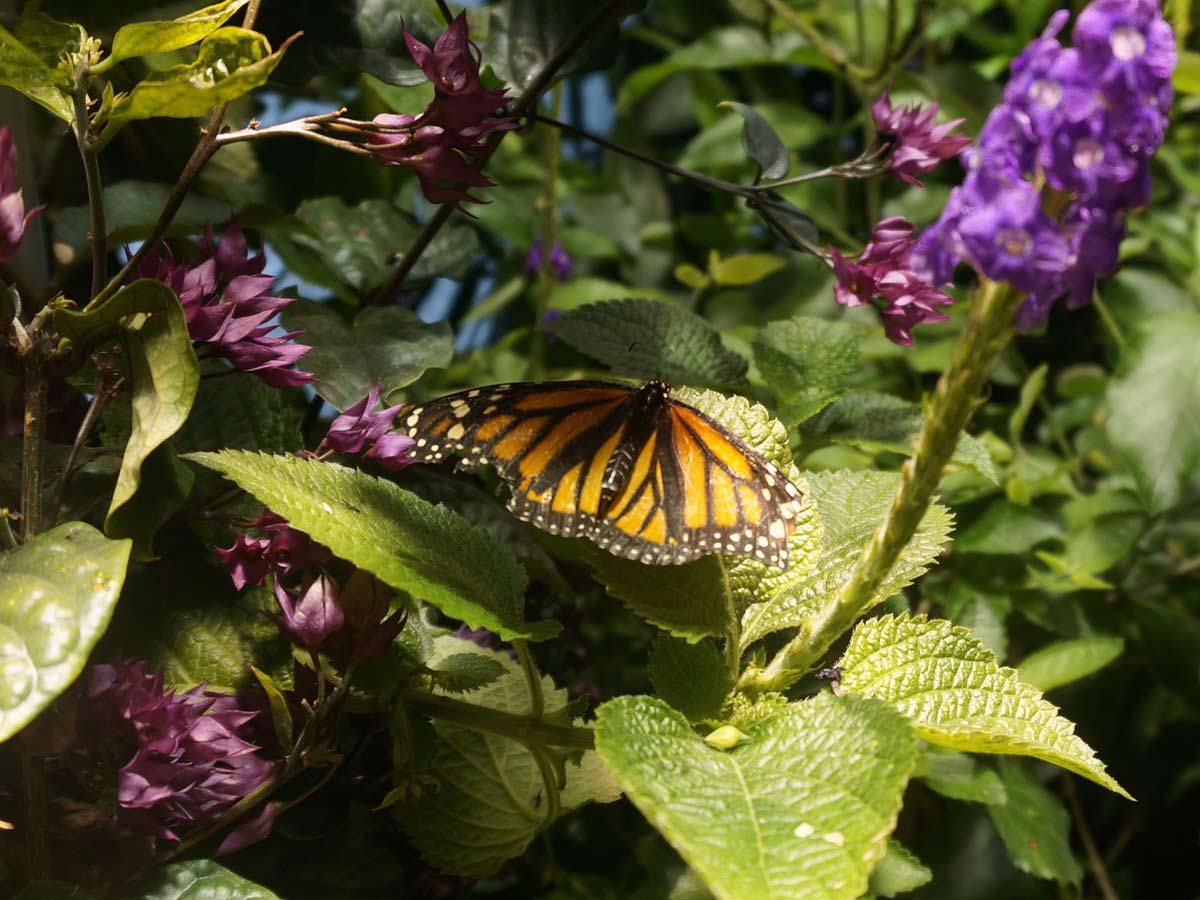 Lindsay takes pride in her gardening, her pollinator garden being successful in attracting admiration from monarchs as well as bringing lovely color to her home.