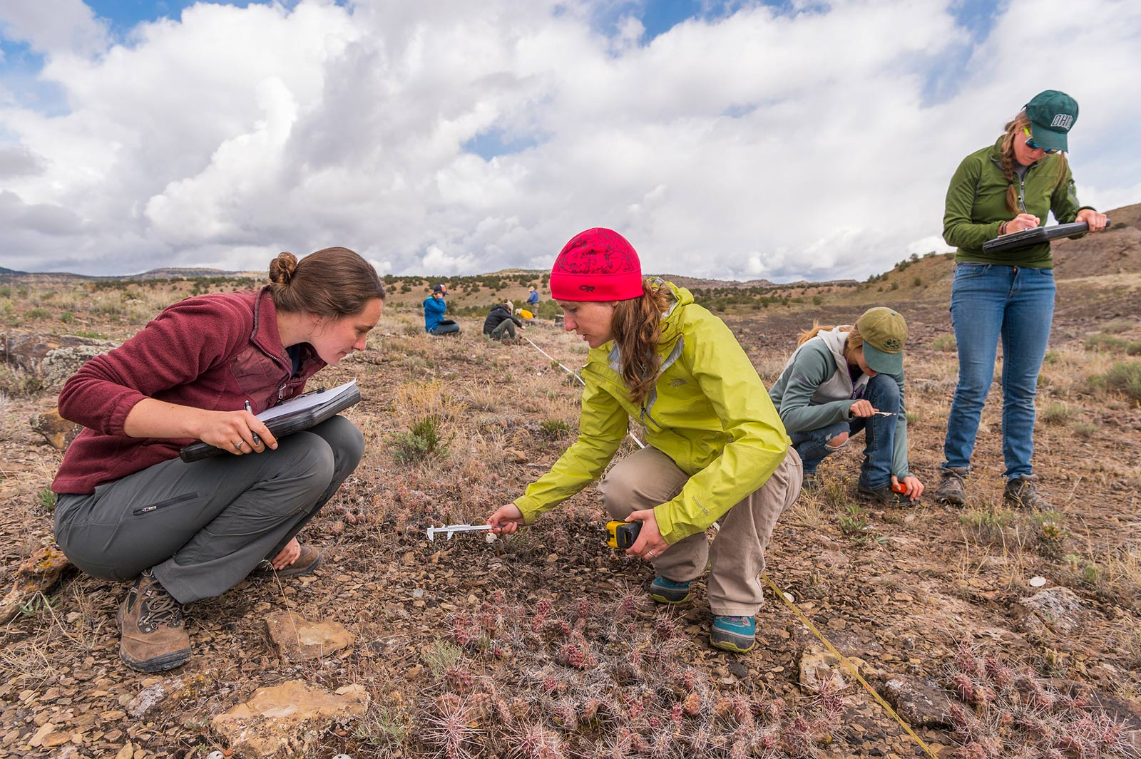 Photos: DBG research team in the field near De Beque, Colorado, for Sclerocactus glaucus. Photo credit: Scott Dressel Martin, courtesy of Denver Botanic Gardens.