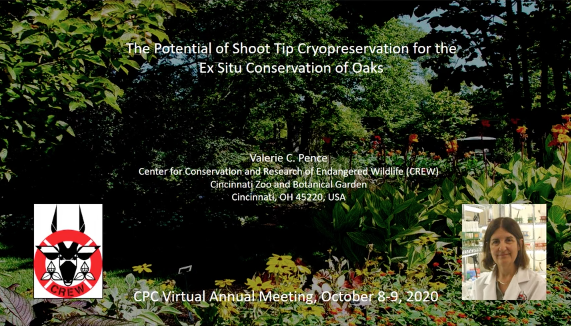 Screenshot of The Potential of Shoot Tip Cryopreservation for the Ex Situ Conservation of Oaks video