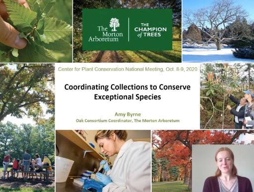 Screenshot from Coordinating Collections to Conserve Exceptional Species video.