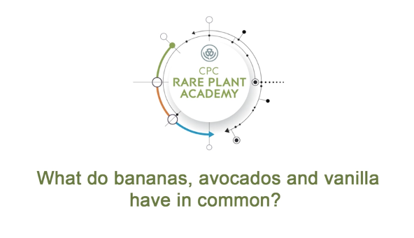 "Video screenshot from ""What do bananas, avocados and vanilla have in common?"""