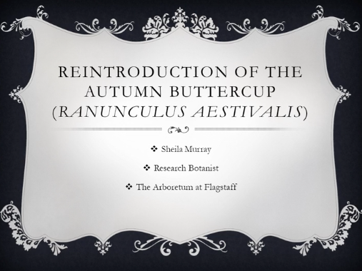 Screenshot from Reintroduction challenges with the Autumn Buttercup (Ranunculus aestivalis) video.