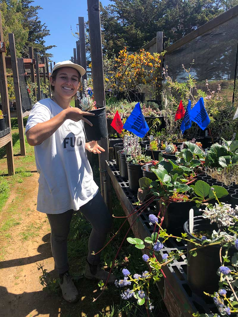 Students in the Interactive Ecology course take on a variety of activities. Here, Gina selects dudleya specimens to plant in the California Conservation Garden. Photo credit: Brett Hall, courtesy of University of California Santa Cruz Arboretum.