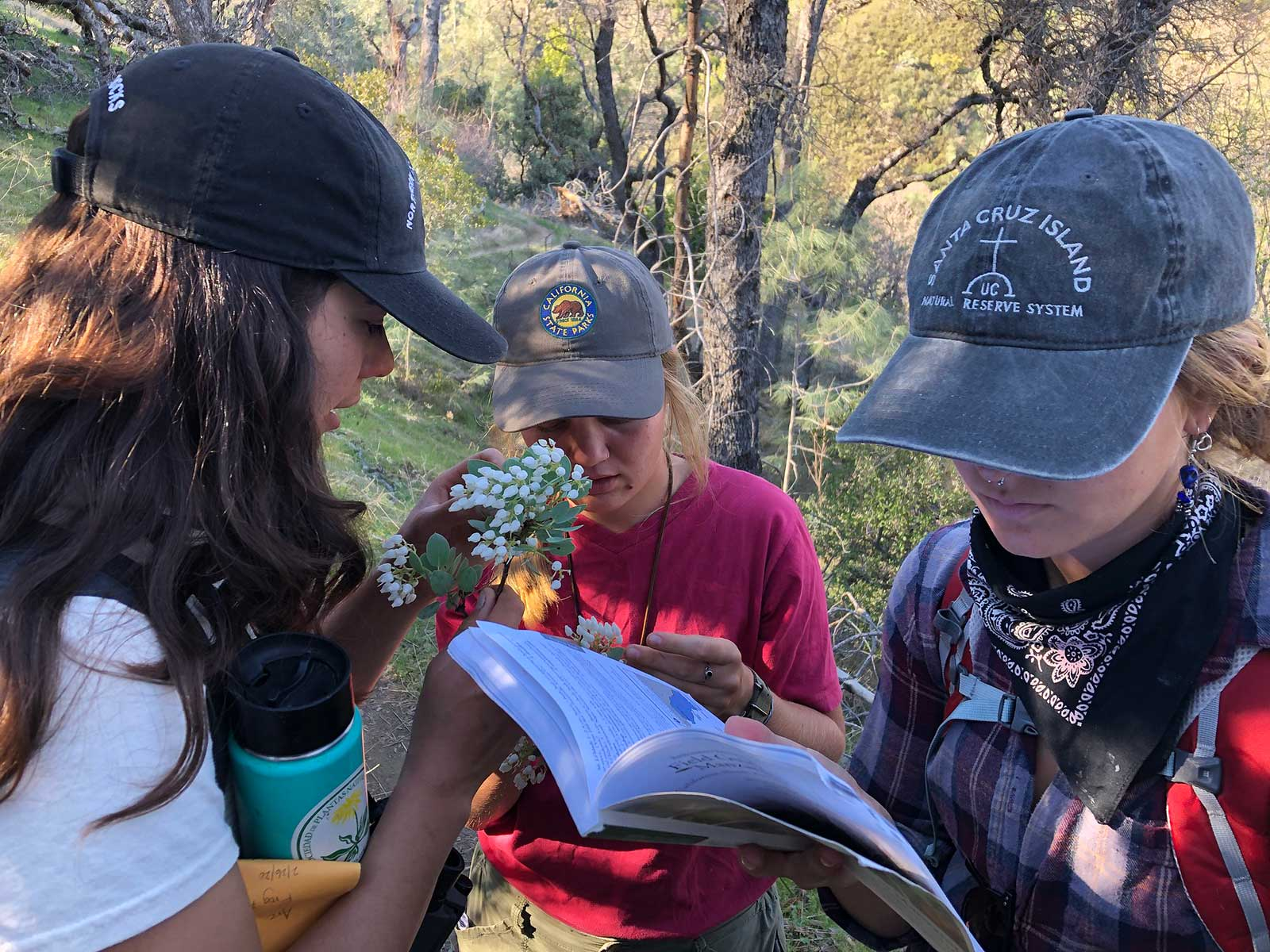 Students Camryn, Tori, and Lucy key out Manzanitas at Henry Coe State Park. Practical field experience and field identification are important skills taught in the course. Photo credit: Brett Hall, courtesy of University of California Santa Cruz Arboretum.
