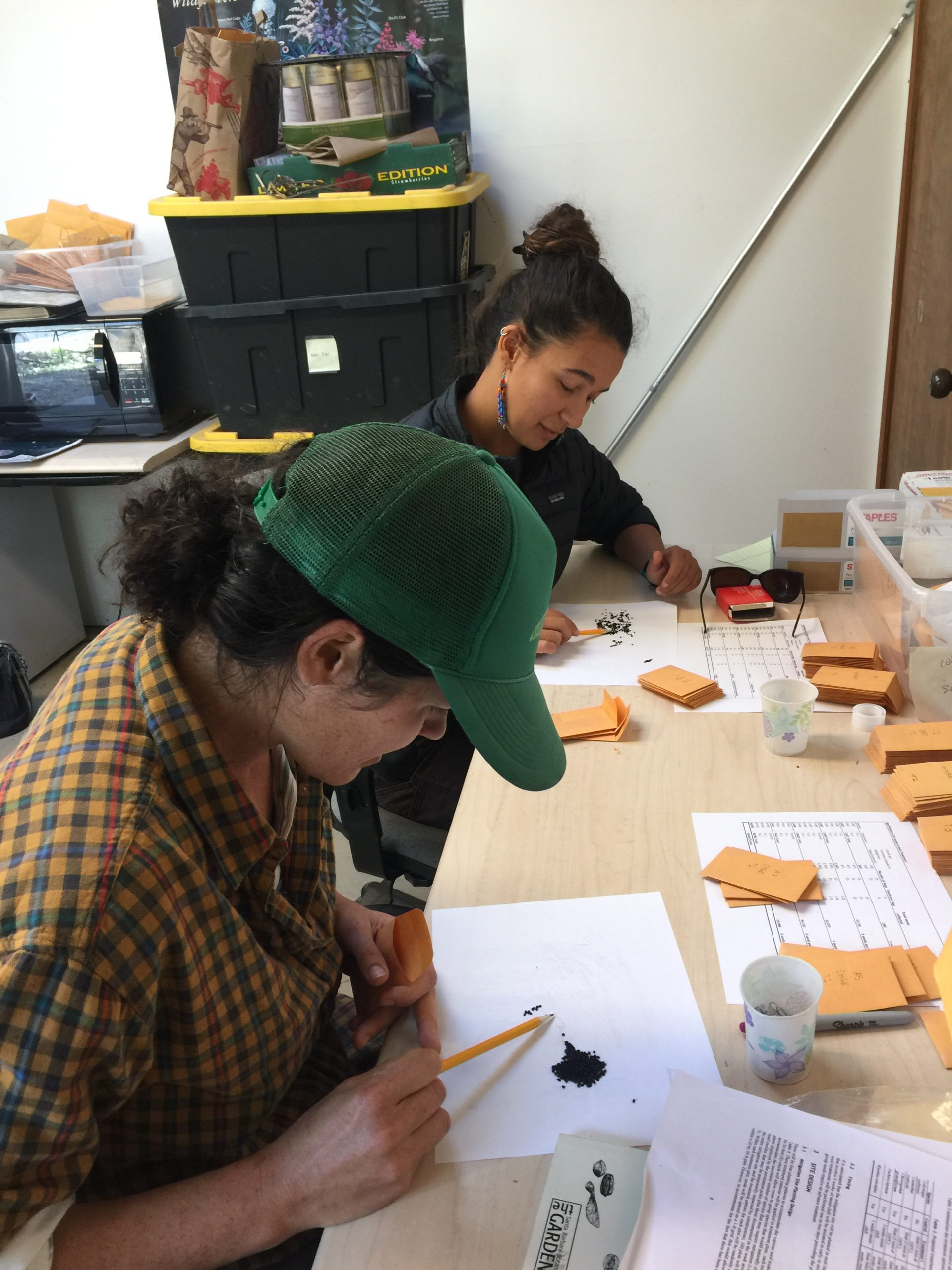 Students Molly and Sheyna count seeds from El Dorado County for the Pine Hill Preserve Project. Photo credit: Brett Hall, courtesy of University of California Santa Cruz Arboretum.