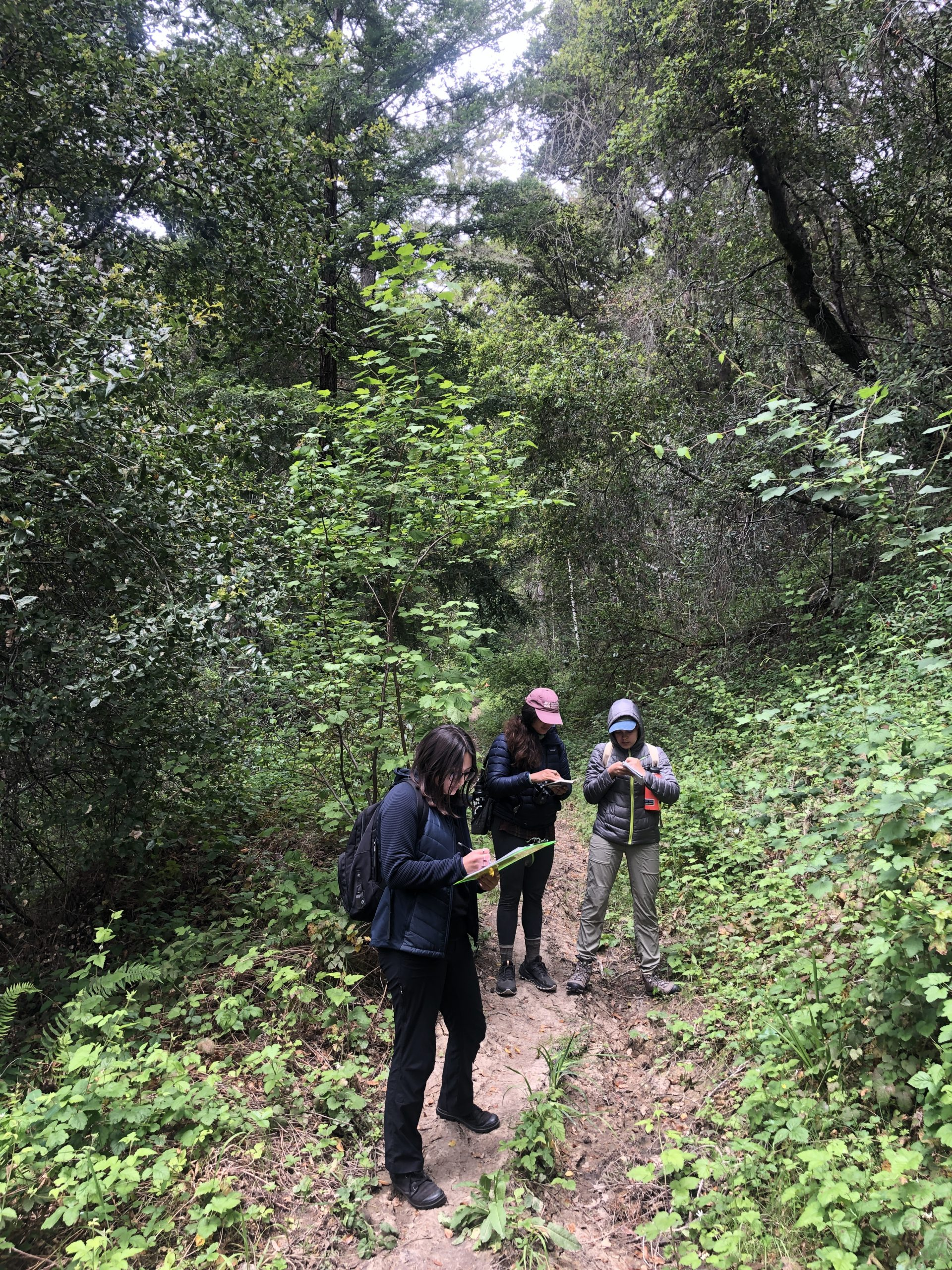 Mariana, Lucy, and Andrea jot down a list of plant species while hiking through the Santa Cruz mountains. Photo credit: Brett Hall, courtesy of University of California Santa Cruz Arboretum.