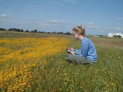 Jennifer observing Lasthenia pollinator.