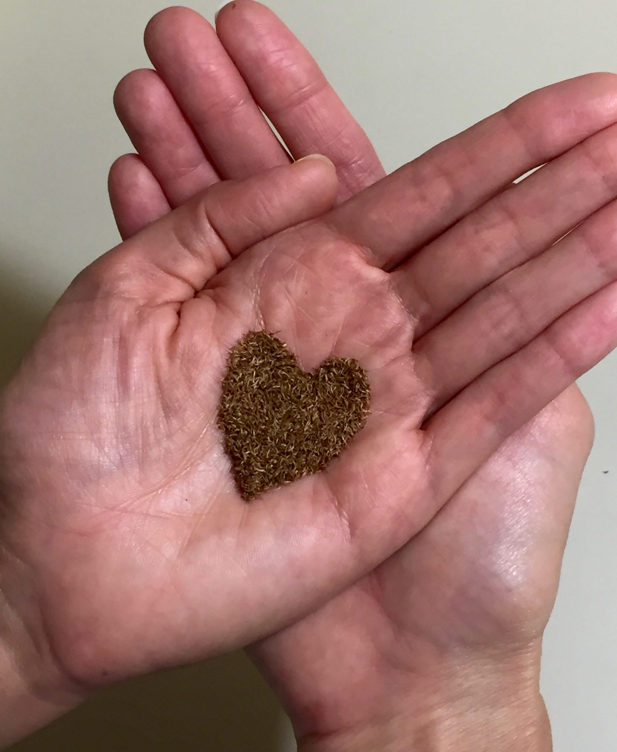 Over 10,000 'Ōhi'a seeds in the palm of the hand.