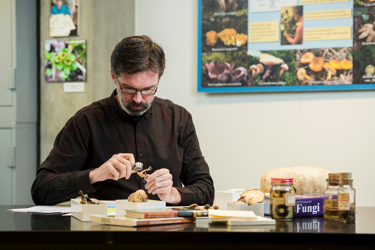 Andrew Wilson sets to work with specimens of the Sam Mitchel Herbarium of Fungi.