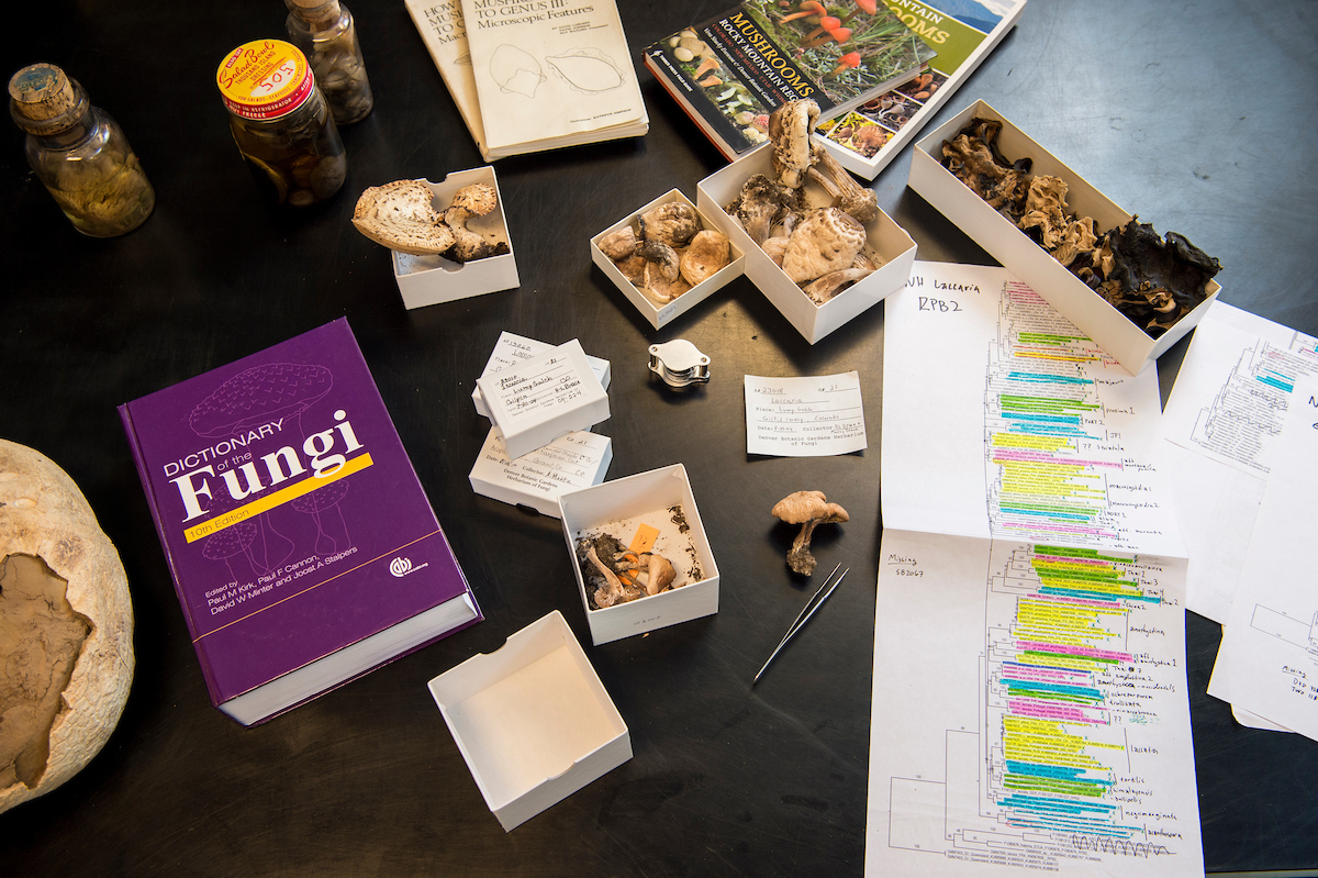 Specimens, phylogenies, and other resources to help identify fungi and conduct research.