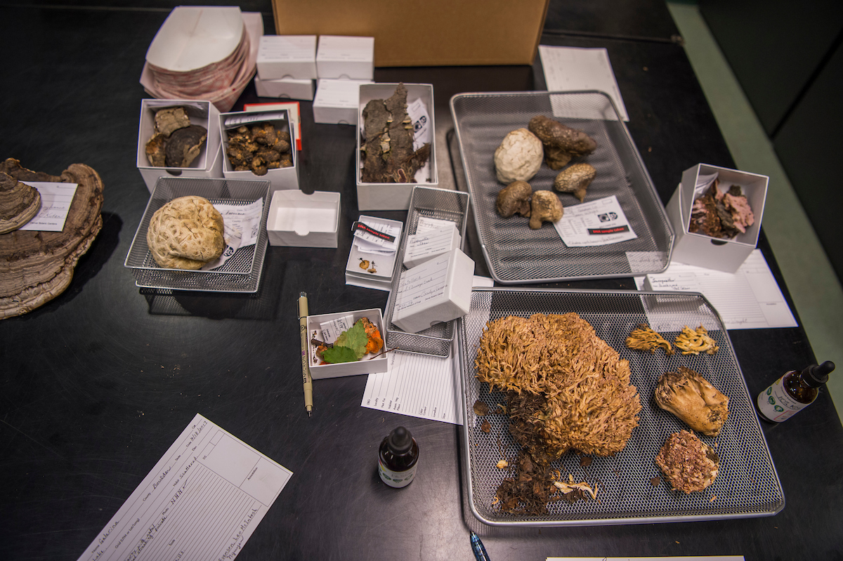 Some of the nearly 30,000 fungi specimens of the herbarium.