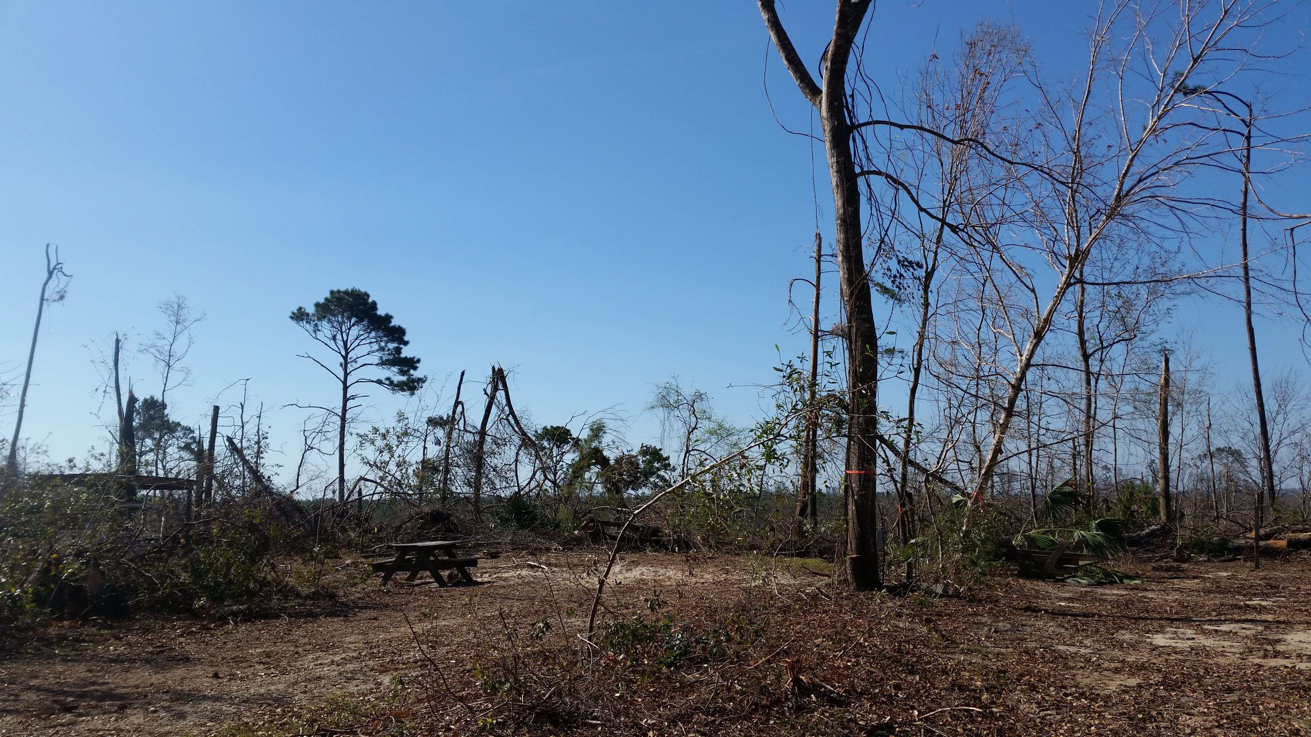 Hurricane Michael in 2018 severely damaged much of the forest in the Torreya State Park, including the rare conifers habitat and the trees themselves.