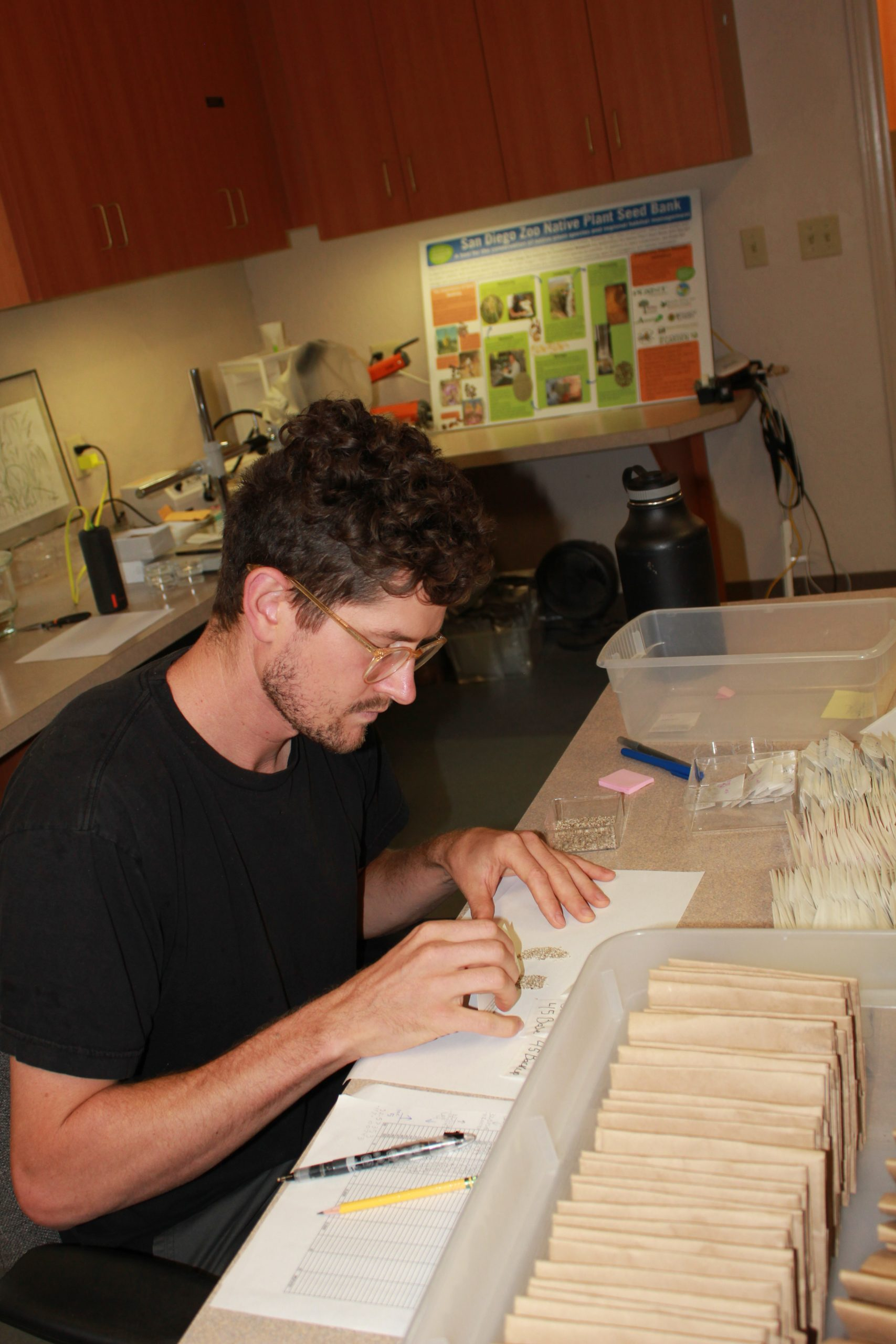 Tobin Weatherson of the Native Plant Seed Bank at the San Diego Zoo sorts through seed collected by maternal line, as each of the rare plant seed collections being support by the Biodiversity Initiative funding will be.