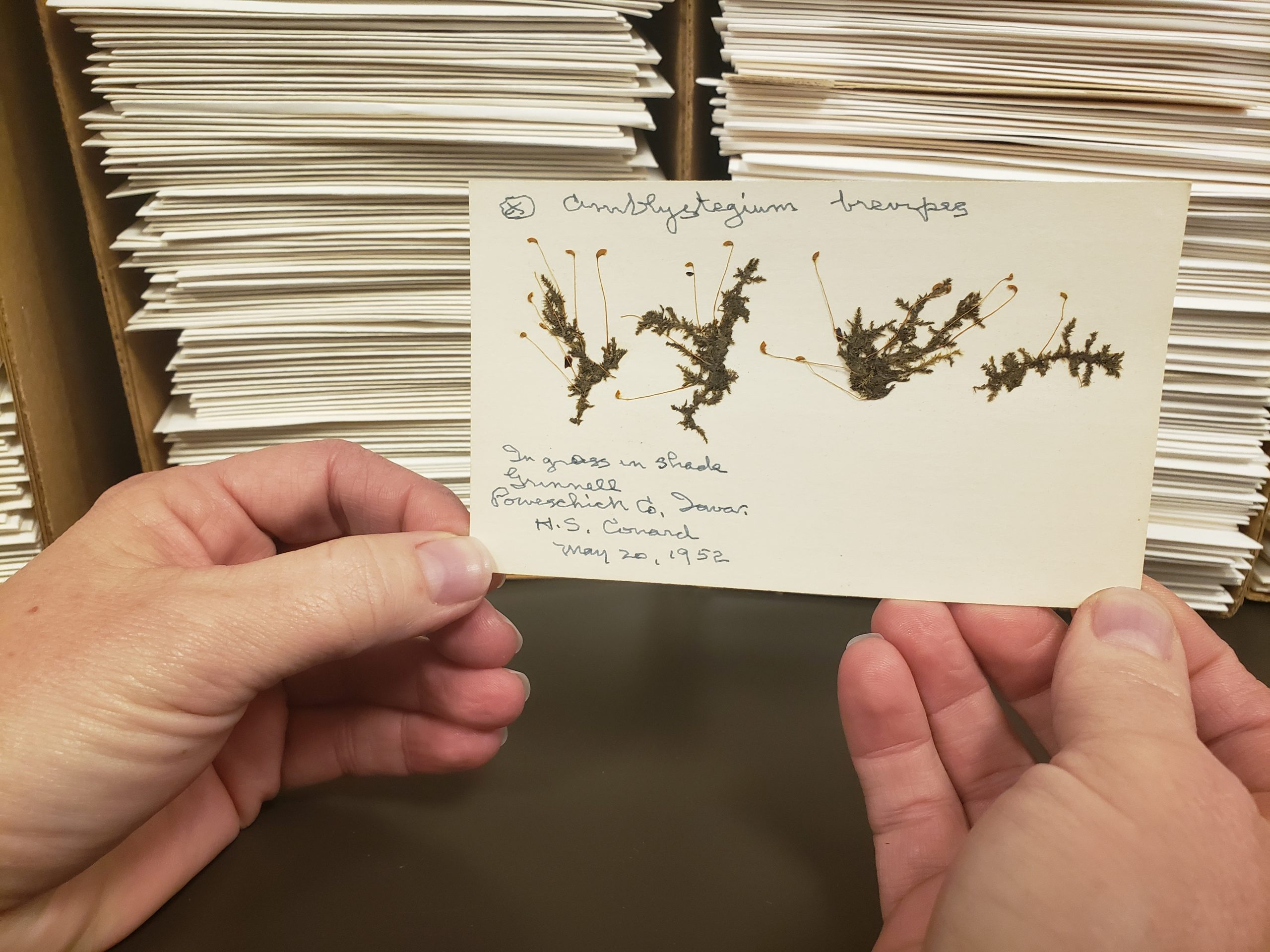 The majority of the bryophyte collection at BRIT was collected between 1934 and 1980.