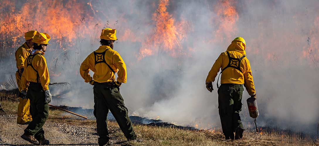 Trained staff and volunteers safely and effectively burn hundreds of acres of prairies, woodlands, glades, and wetlands each year to achieve ecological objectives and to promote biological diversity.