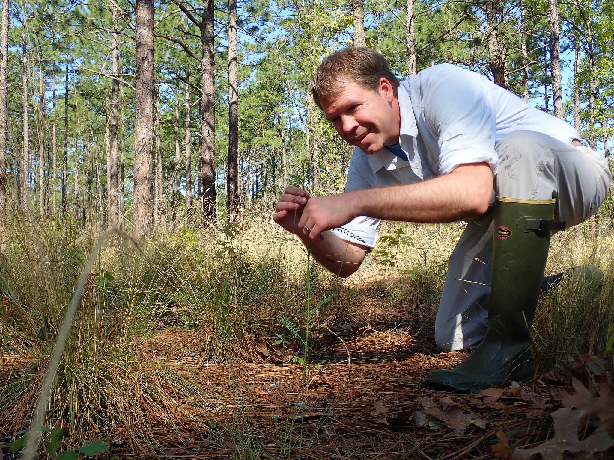 Mike Kunz monitoring Astragalus michauxii at Fort Bragg